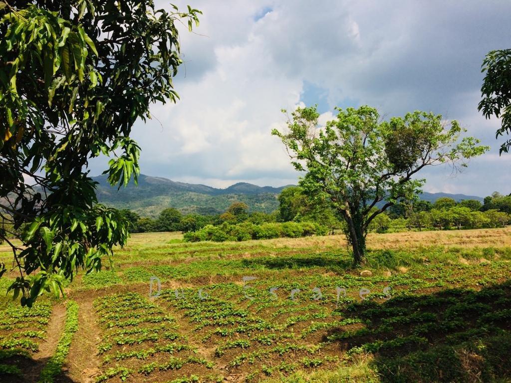 Kalundewa Retreat - Paddy Field