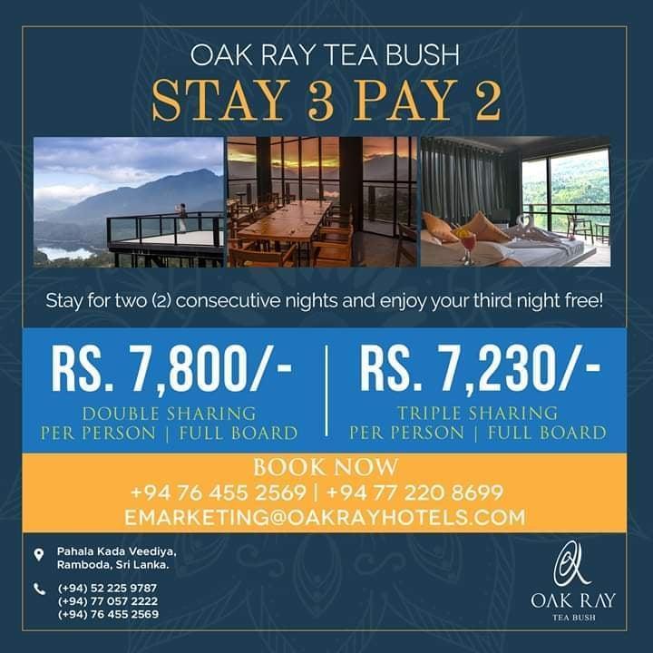 Oak Ray Tea Bush